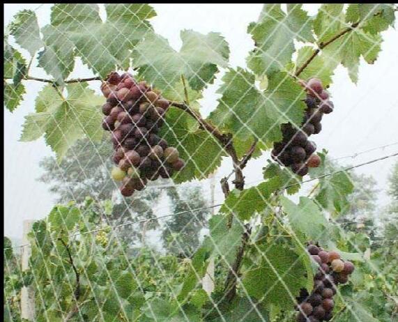 农业用网2